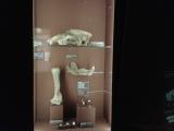 7.A v Národním muzeu